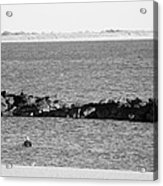 Diving Coney Island In Black And White Acrylic Print