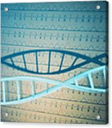 Dna And A Genetic Sequence Acrylic Print