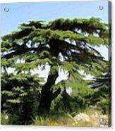 Do-00511 Cedar Forest Acrylic Print