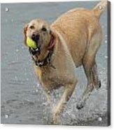 Dog 111 Acrylic Print by Joyce StJames