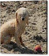 Dog 113 Acrylic Print