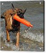 Dog 119 Acrylic Print