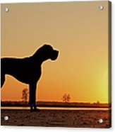 Dog Against Setting Sun Acrylic Print