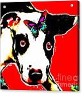 Dog And Butterfly Acrylic Print