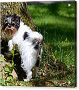 Dog And Tree Acrylic Print