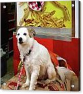 Dog At Carnival Acrylic Print