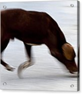 Dog In Motion Acrylic Print