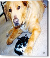 Dog Named Forest And Kitten Named Princess Acrylic Print