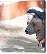 Dog On A Bad Luck Day Acrylic Print