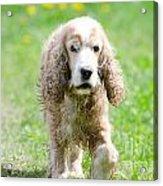 Dog On The Green Field Acrylic Print
