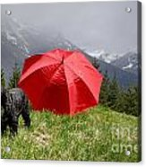 Dog On The Top Of A Mountain Acrylic Print