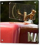 Dog On Truck  Acrylic Print
