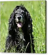 Dog Sitting On The Green Grass Acrylic Print