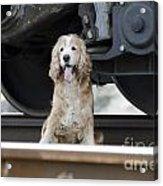 Dog Under A Train Wagon Acrylic Print