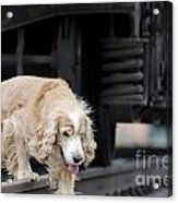 Dog Walking Under A Train Wagon Acrylic Print