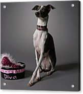 Dog With Diva Bowl Acrylic Print by Chris Amaral