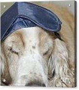 Dog With Sleep Mask Acrylic Print