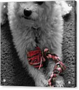 Dog With Tug Toy Soft Focus Acrylic Print