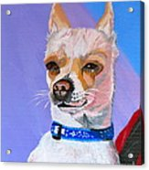 Doggie Know It All Acrylic Print