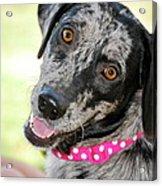 Doggone Cute Acrylic Print