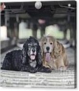 Dogs Lying Under A Train Wagon Acrylic Print