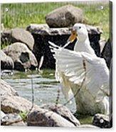 Doin The Duck Splash Acrylic Print