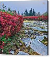 Dolly Sods Wilderness Acrylic Print
