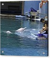 Dolphin And Trainer At The Underwater World In Sentosa In Singap Acrylic Print