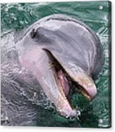 Dolphin With His Fish Acrylic Print