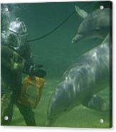 Dolphins Hover Near A Diver Holding An Acrylic Print by Luis Marden