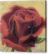 Doris's Rose Acrylic Print