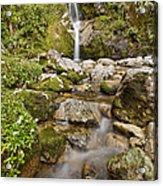 Dorothy Falls Near Lake Kaniere New Acrylic Print
