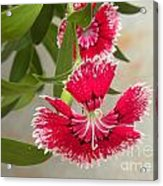 Double Beauty Acrylic Print