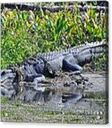 Double Grinned Acrylic Print