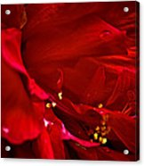 Double Red Acrylic Print