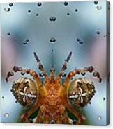 Double Spider Acrylic Print