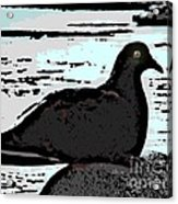 Dove At The Beach Acrylic Print