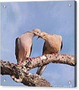 Dove Devotion Acrylic Print
