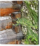 Dovetail Log Construction Acrylic Print