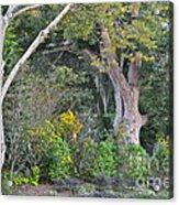Downtown Garden Acrylic Print