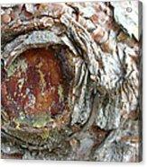 Dragon Eye Acrylic Print