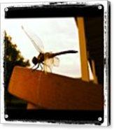Dragon Fly Acrylic Print by Dana Coplin