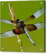 Dragon Fly Green Acrylic Print