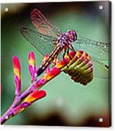 Dragon Fly Acrylic Print