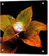 Dragon Plant Patronus Acrylic Print by Michael Taggart