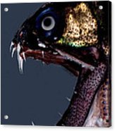 Dragonfish Mouth Acrylic Print