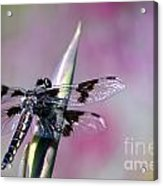 Dragonfly Bokeh Acrylic Print