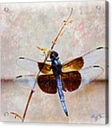 Dragonfly Clinging Acrylic Print