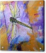 Dragonfly Dreams Acrylic Print by M C Sturman