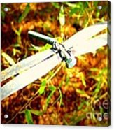 Dragonfly Droid Acrylic Print
